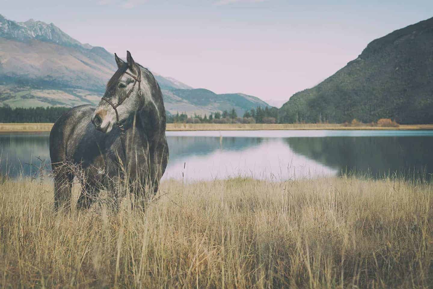High Country Horses •